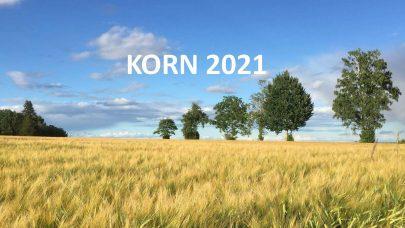 Bilde Korn 2021 nett